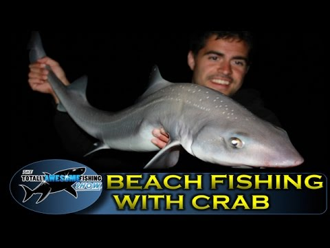 Beach fishing tips (Part 7) - Crab bait - TAFishing Show