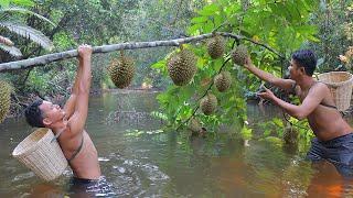 Durain Fruit - Amazing Adventure to Find Durain in the jungle eating Delicious