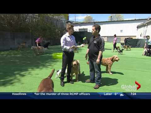 Dog Talk June 4 on Global Morning News a Tour of Jollytails Halifax