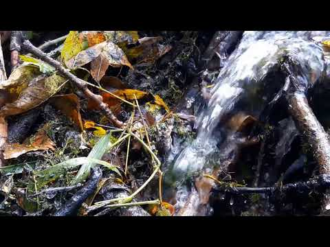 Relaxing autumn stream in the forest. Soothing Water Sounds. (10 hours) White Noise for sleep.