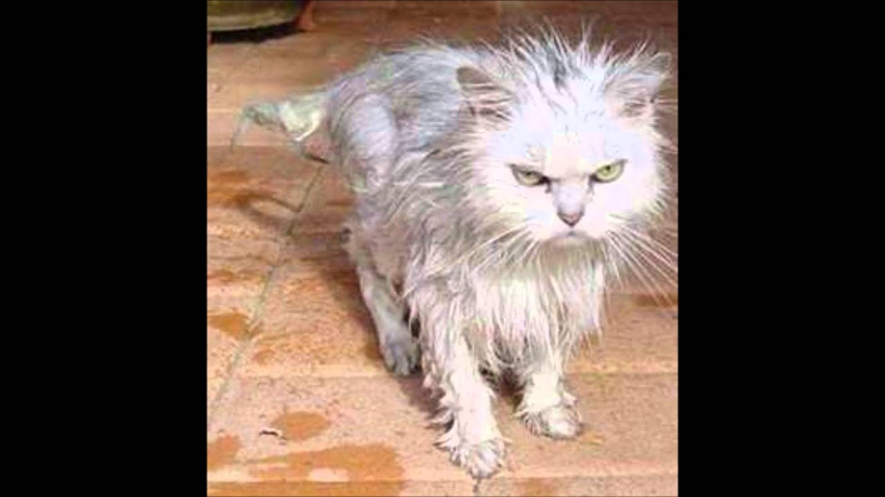 Фото мокрой котенка 16 фотография