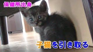 【File.1】保健所から子猫を引き取りました