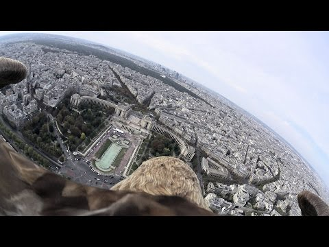 Flying eagle point of view #4 by Sony Action Cam Mini (A flight over Paris)