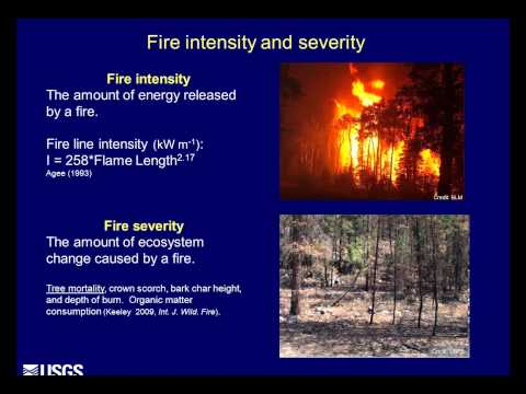 Can our forests take the heat? Fire, climate change and tree mortality in the west