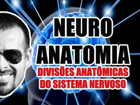 Vídeo Aula 068 - Neuroanatomia: Divisões anatômicas do Sistema Nervoso (SNC, SNP e SNA)