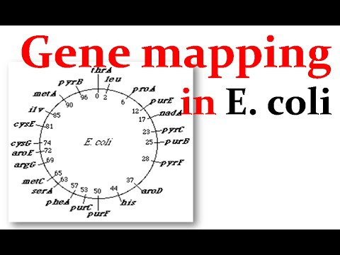 Gene mapping in E.coli