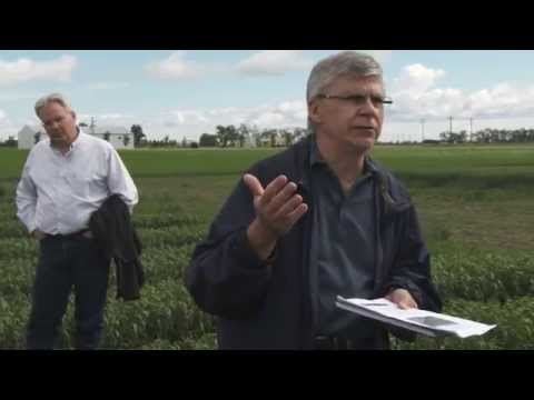 Crop Walk - Fertigation, Fusarium, Stack Agrogommic - June 19, 2014