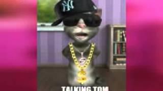 Casa Sola Gato Tom