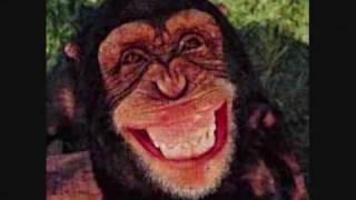 Watch A Cheeky Monkey video