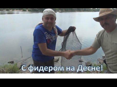 ловля леща фидером на десне видео