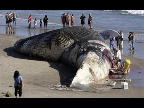 World's Biggest Animal