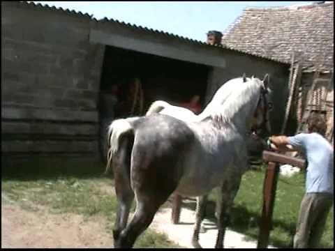 Pastuh Toplica (Otok, Slavonija) - horse sex