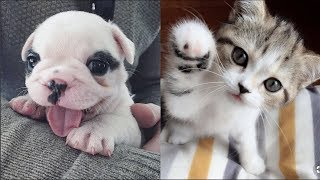 Funny Baby Animals Compilation - Cutest Baby Animals Ever
