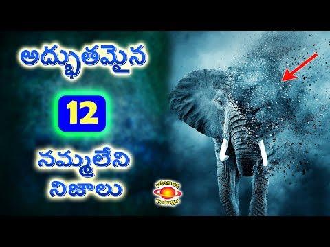 Top 12 Amazing Facts in Telugu by Planet Telugu మీరు నమ్మలేని నిజాలు