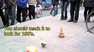 中国で貯金箱にお金を次々に入れる鳥の特技が凄い