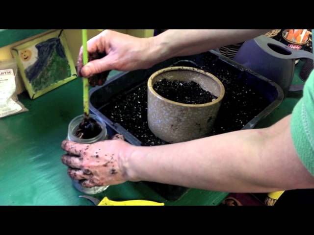 How to Plant an Avocado Tree Grown from a Pit
