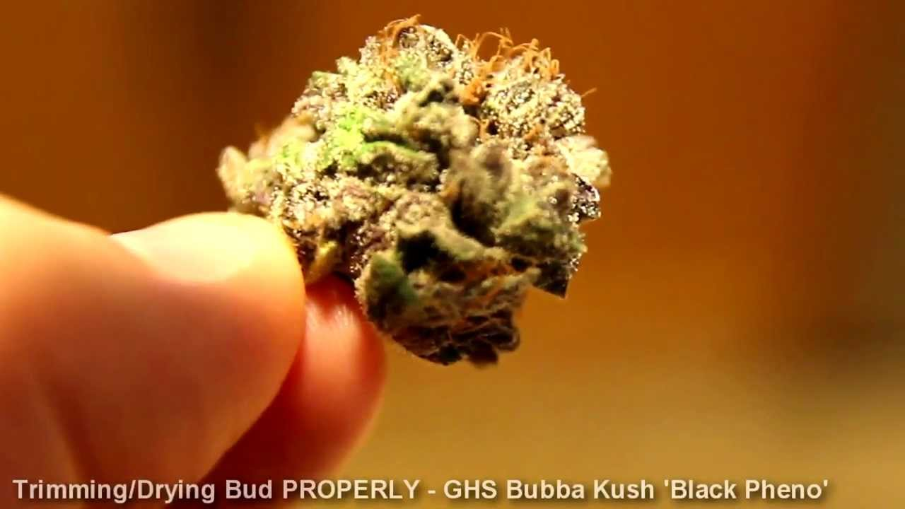 how to trim  manacure and dry buds properly