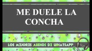 Me Duele La Concha - Conversaciones Whatsapp - Los Mejores Audios Y Videos Whatsapp