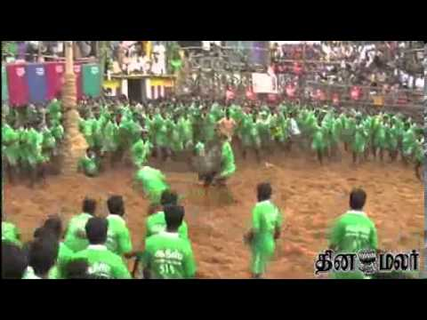Trichy Suriyur Jallikattu Video News In Dinamalar Tamil Video Dated Jan 15th 2014 video