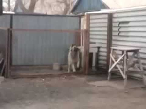 Не РЕАЛЬНО ! Собака танцует под Modern Talking! Видео приколы смотреть самое смешное видео