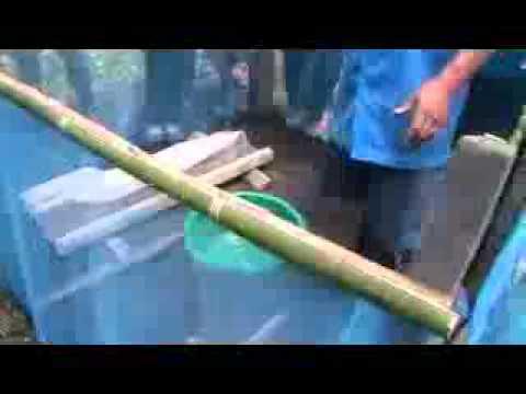 เรื่องของกบบ้าป่าไผ่270454p2.avi Music Videos