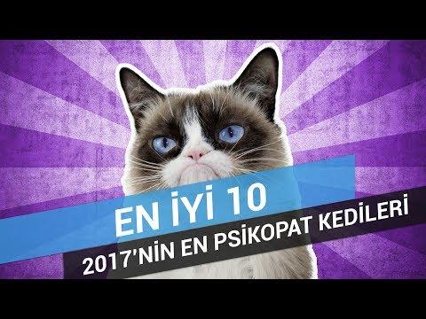2017'NİN EN PSİKOPAT 10 KEDİSİ