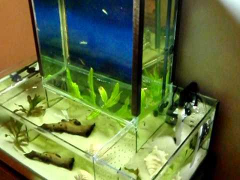How to Have a Healthy, Happy Aquarium