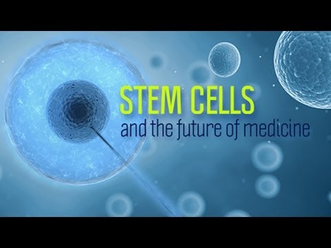 Stem Cells and the Future of Medicine - Research on Aging