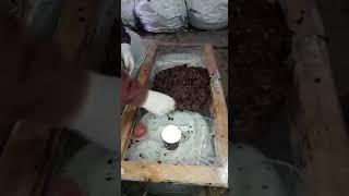 Solucan sayimi