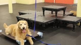 Dog Training | Sherlock's success | Solid K9 Training Dog Training