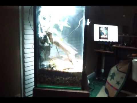 10 gallon fish tank to vertical terrarium conversion youtube for Vertical fish tank
