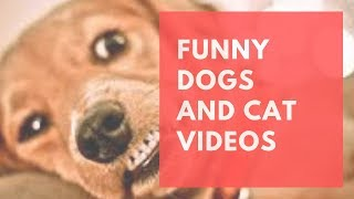 Funny Dog and Cat Videos Vines -Try Not To Laugh Challenge -  Cat & Dog Vines Compilation 2019