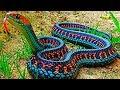 Bunlara Dikkat! Göründüğü Kadar Masum Olmayan 10 Acımasız Hayvan
