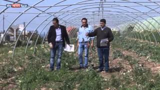 لبنان.. خسائر فادحة للقطاع الزراعي