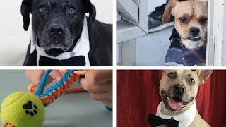 Cute DIY Dog Accessories