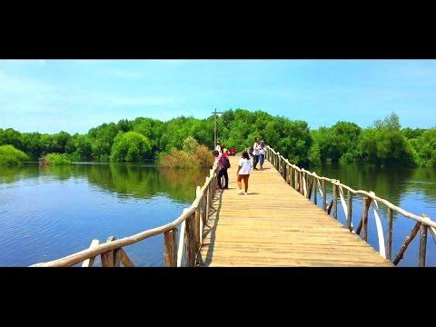 JAKARTA - wisata alam hutan mangrove
