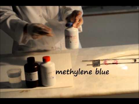 modified ziehl neelsen stain cryptosporidium