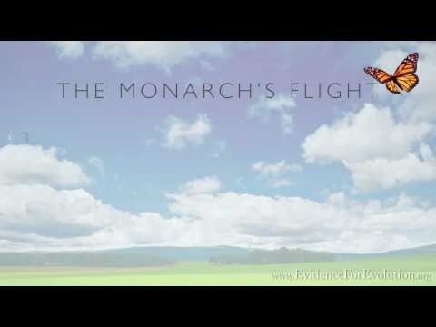 The Monarch Butterfly - Evidence For Evolution .org