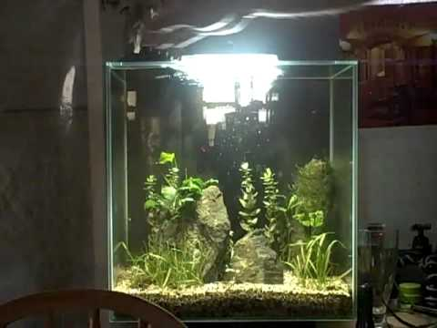 Fluval Edge 12 Gallon Review How To Save Money And Do It