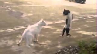 Funny Cats Videos Compilation 2014