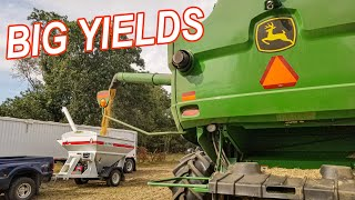 BIG YIELDS with BIG SURPRISES| HARVEST 19 Day 2