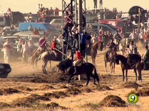 Un hombre se cae y es cogido por el toro - San Antolín 2014 Medina del Campo