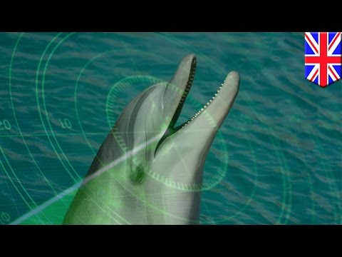 Dolphin-inspired sonar technology helps researchers with ocean exploration - TomoNews
