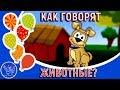 Как говорят животные Детские песенки для самых маленьких Смотреть развивающие мультики для детей mp3