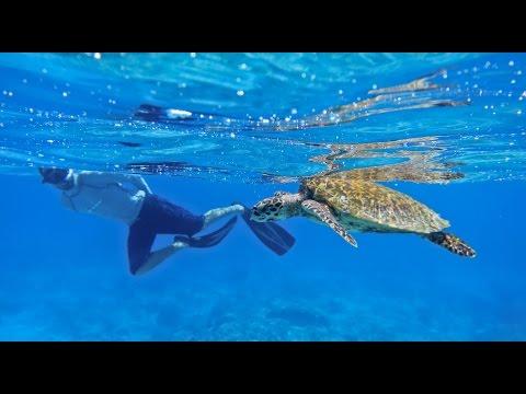 Conserving Paradise - Seychelles Marine Conservation