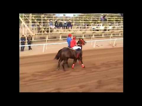 Carreras de Caballos La 700 vs La Dama de Rosa.