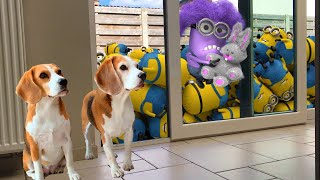 🌟💜BEST OF THE MINIONS in REAL LIFE COMPILATION💜🌟Minions living with Funny Dogs Louie and Marie