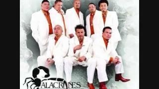 Watch Alacranes Musical Por Amarte Asi video