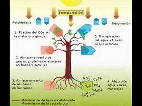 Las plantas youtube for Las caracteristicas de los arboles