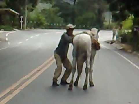 bêbado tentando subir no cavalo